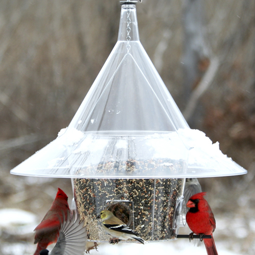 Mandarin Squirrel Proof Feeder
