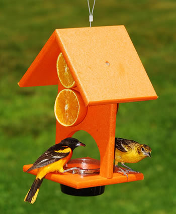 Orange Oriole Feeder