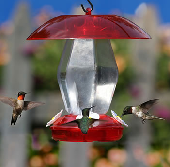 Jubilee Hummingbird Feeder