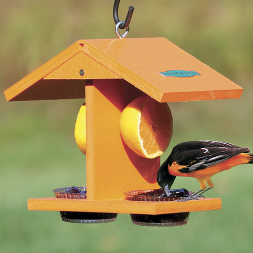 Eco-Oriole Fruit and Jelly Feeder
