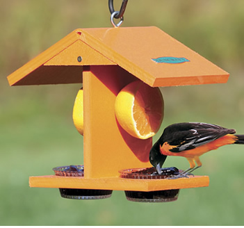 Eco Oriole Fruit & Jelly Feeder