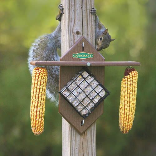 Eco Squirrel Corn Suet Teeter