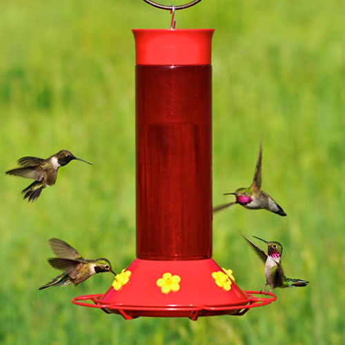 Hummer's Favorite Hummingbird Feeder
