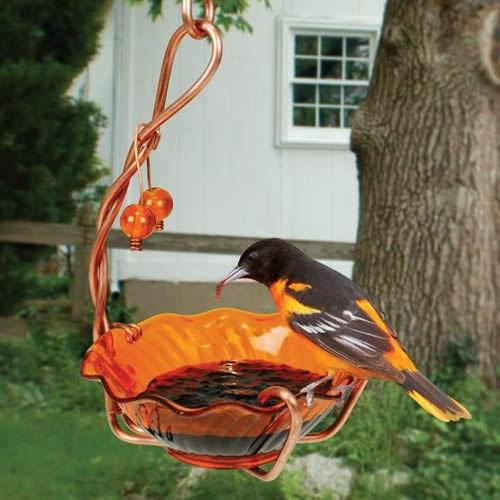 Oriole Single Cup Jelly Feeder