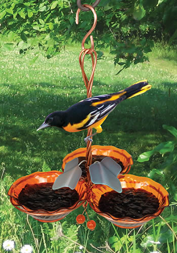 Oriole Triple Cup Jelly Feeder