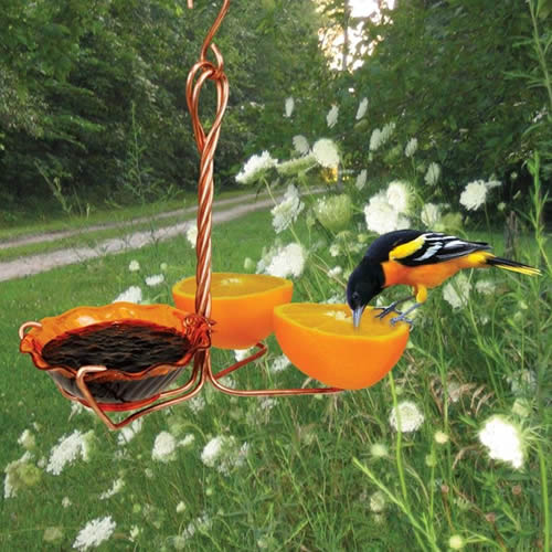 Copper Oriole Fruit and Jelly Feeder