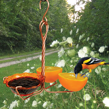 Copper Oriole Fruit & Jelly Feeder
