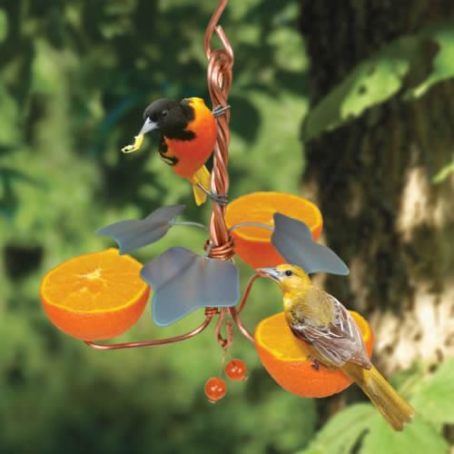 Copper Oriole Triple Fruit Feeder