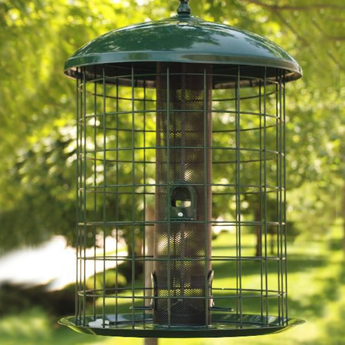 Caged Mesh Screen Feeder