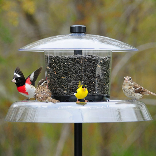 Droll Yankees Jagunda Squirrel-Proof Bird Feeder & Pole (41537) photo
