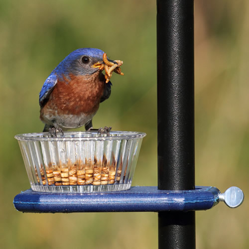bamboo natureswaybirds feeders feeder bamboofeeders com large bluebird bird