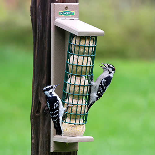 Tree Mount Suet Ball Feeder