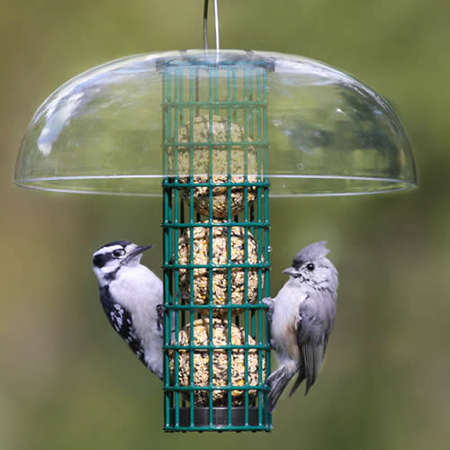 Protected Seed Ball Feeder