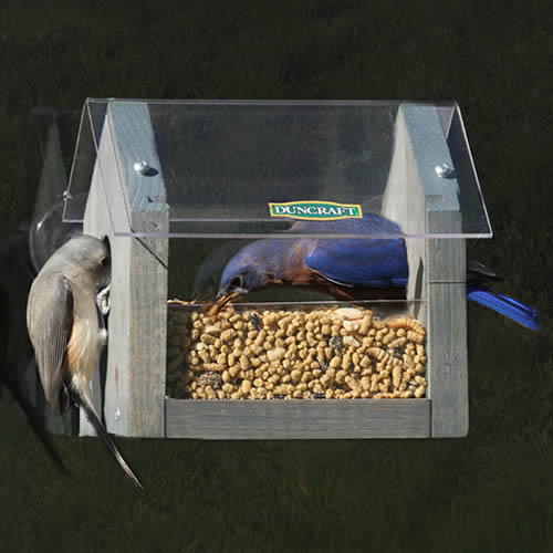 Window Mealworm Feeder