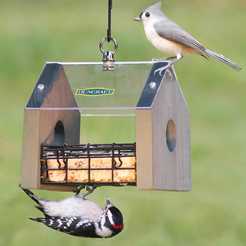 Sheltered Stained Suet Feeder