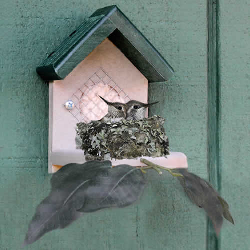 Duncraft Hummingbird Nester