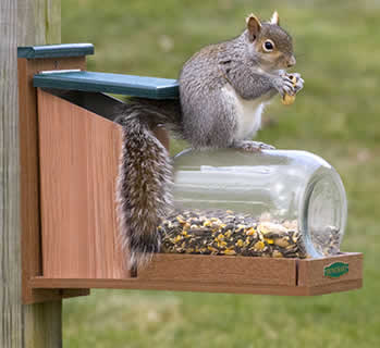 Squirrel Jar Munch Box