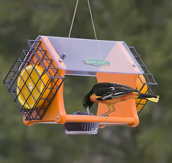 Eco Delight Oriole Feeder