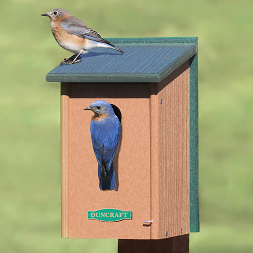 Eco-Strong Bluebird House