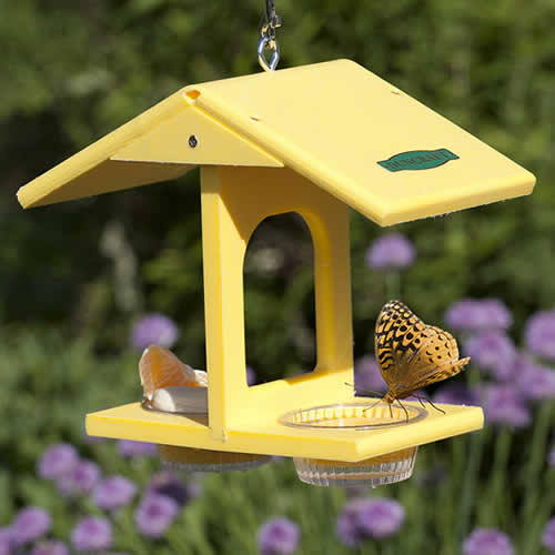 Eco-Butterfly Feeder