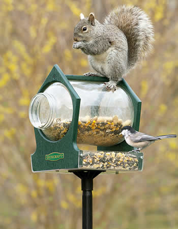 Eco Squirrel Jar Post Feeder