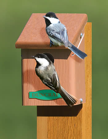 Eco Chickadee Bird House
