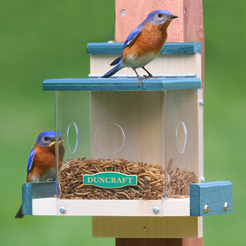 Clearview Bluebird Feeder