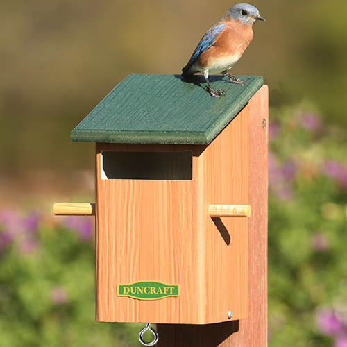 Sparrow-Resistant Bird House