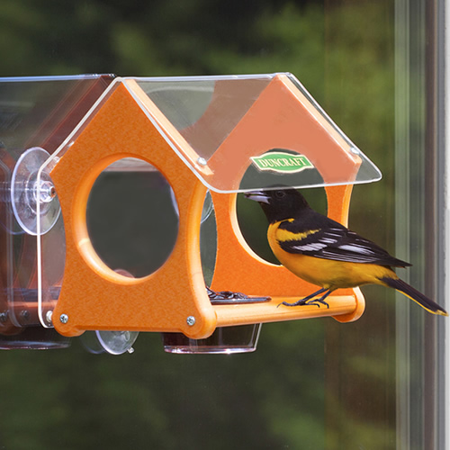 Oriole Window Jelly Bird Feeder