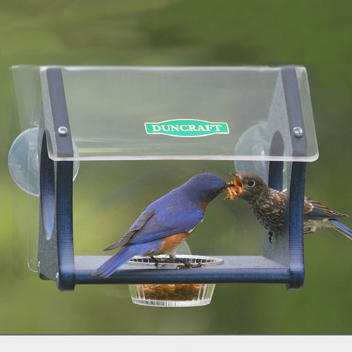 Bluebird Mealworm Fly Thru Window Feeder