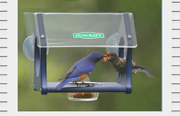 Eco Fly Thru Window Feeder
