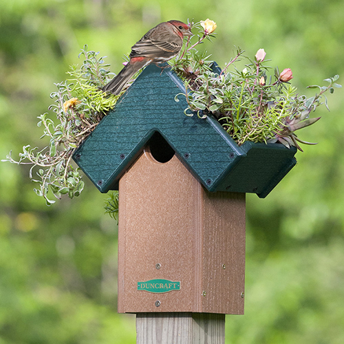 Rooftop Fly-Thru Bird House