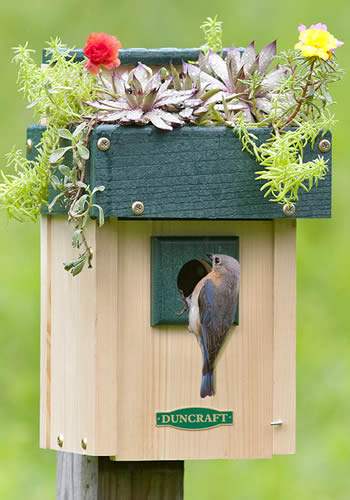 Rooftop Birdhouse Planter