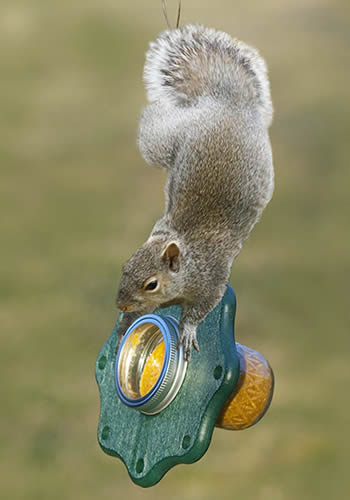 Have A Ball Squirrel Jar