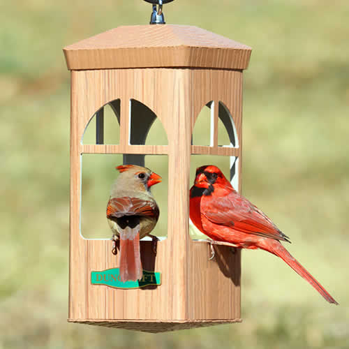 Split Window Bird Feeder
