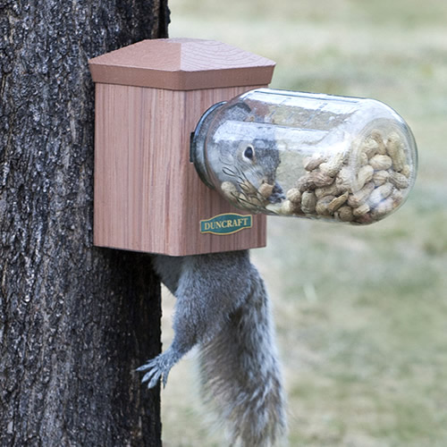 Bottoms Up Squirrel Jar Feeder