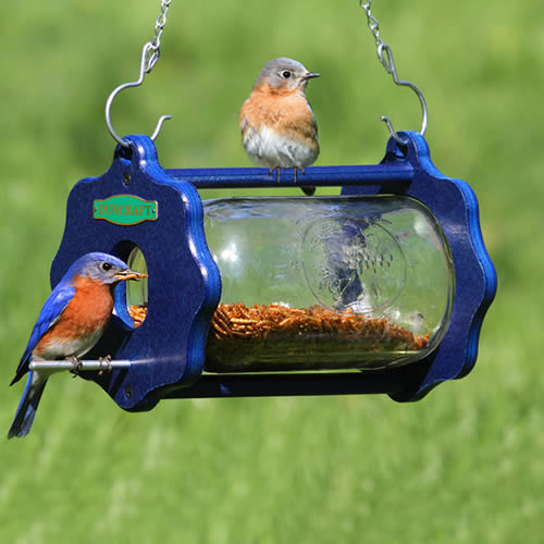 Bluebird Bug-A-View Jar