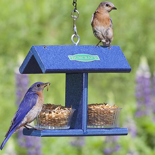 Duncraft EZ Bluebird Feeder