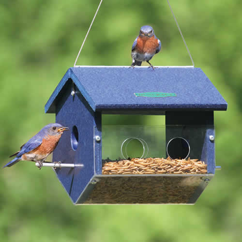 Large Easy View Bluebird Feeder