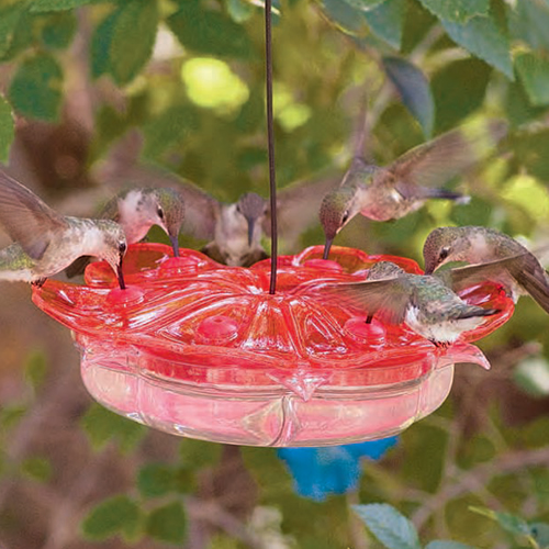 Petunia Hummingbird Feeder