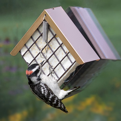 Window Copper Top Suet Feeder