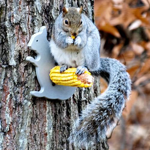 Squirrel Silo Corn Feeder
