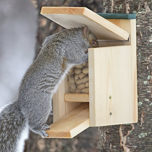 Duncraft Jack In The Box Squirrel Feeder