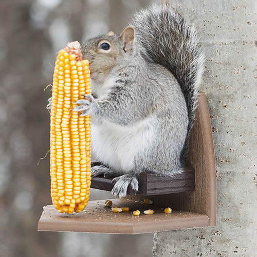 Squirrel Corn Recliner