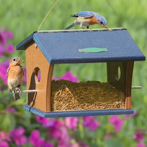 Eco Friendly Bluebird Feeder