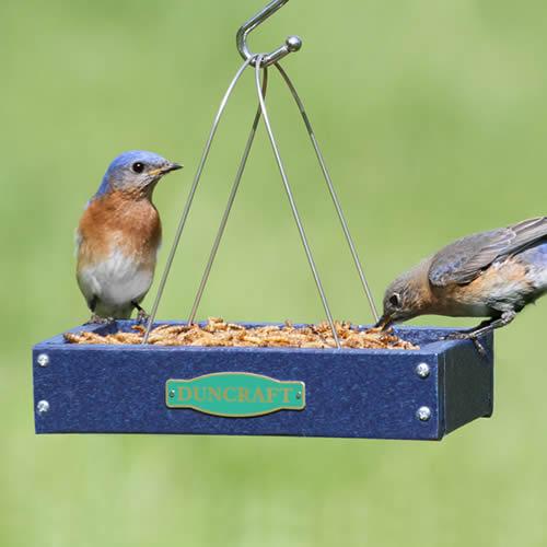 Duncraft Com Duncraft Hanging Bird Seed Tray