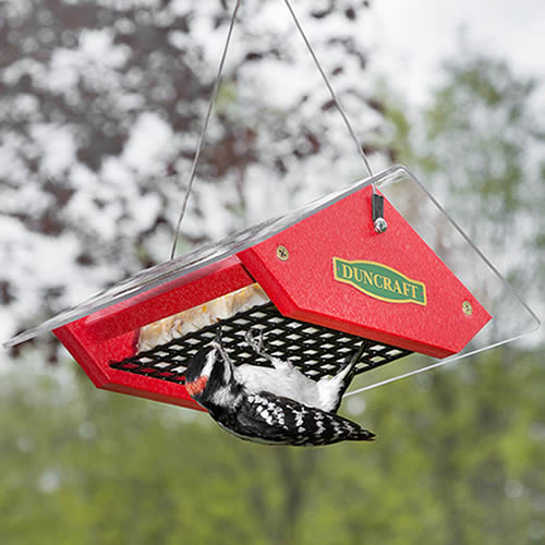 Touch Free Suet Feeder