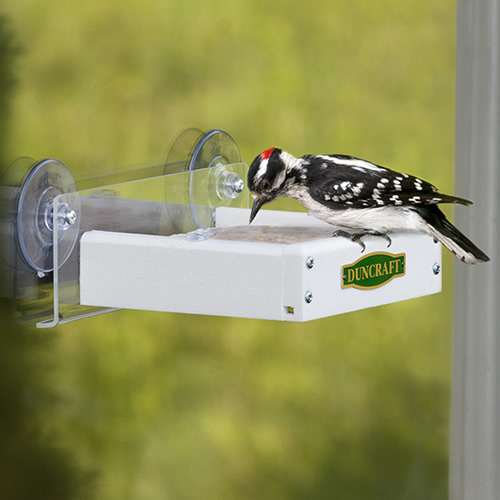 Touch Free Window Suet Feeder