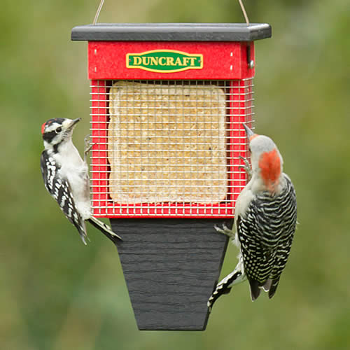 Three Woodpecker Suet Shield Wrap Feeder