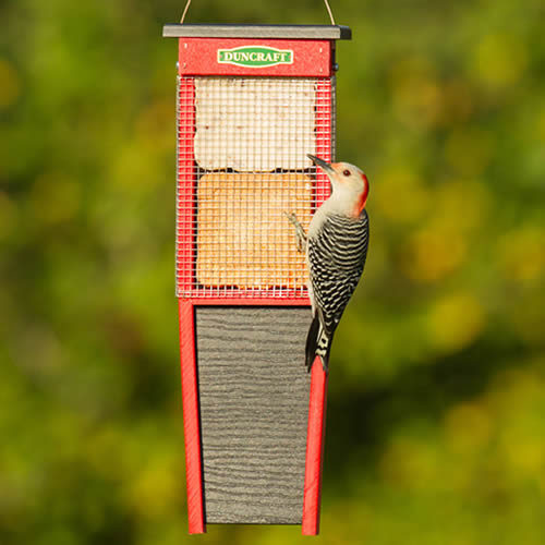 Woodpecker Suet Shield Wrap Feeder